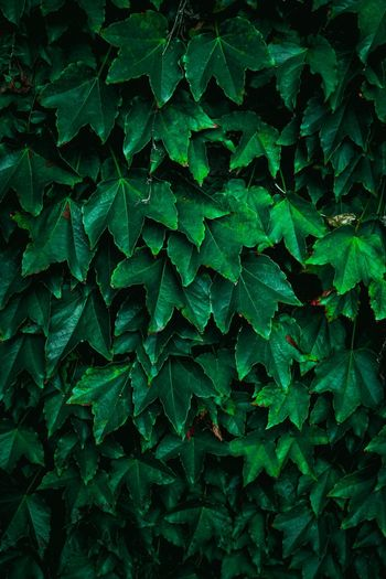 Green plant leaves in the nature in atumn season