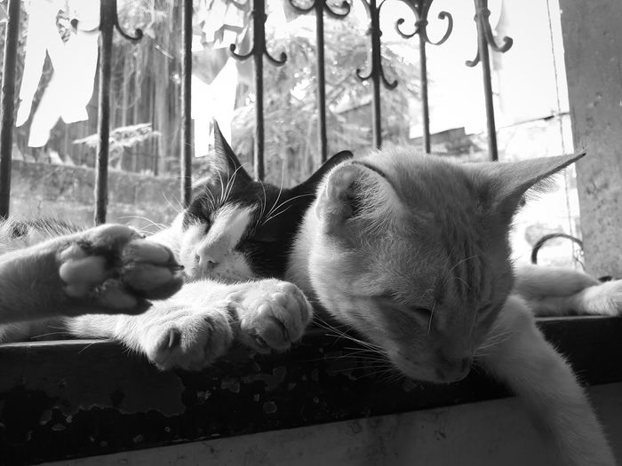 Cat Cuddle Monochrome Black And White Pet Cat Dog Animal Themes Mammal Window One Animal No People Domestic Cat