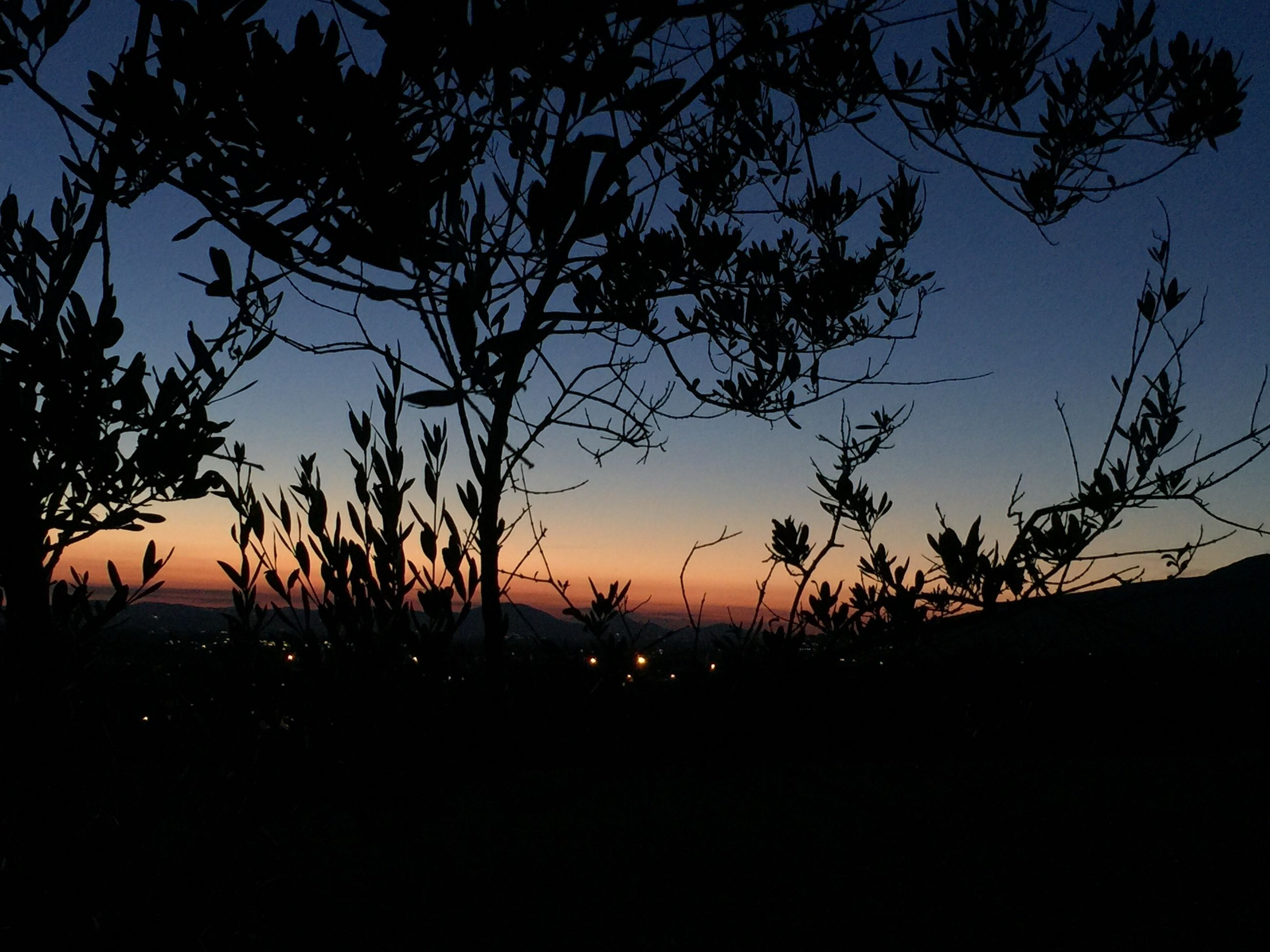 sunset, silhouette, tranquility, tree, tranquil scene, scenics, beauty in nature, orange color, sky, nature, sun, dark, idyllic, landscape, bare tree, outline, growth, outdoors, no people, majestic, non-urban scene, non urban scene, remote, glowing, cloud