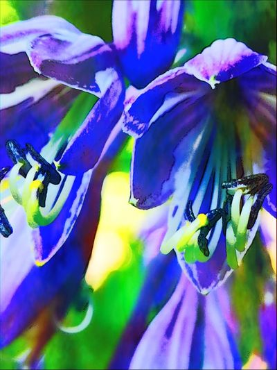 Lilablumenbild Yellow Colored EyeEmpainting Lilac Colored Flower Flower Abstract Full Frame Close-up