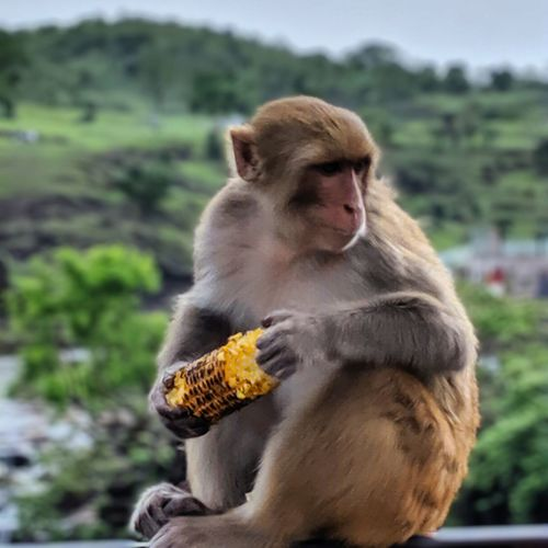 Monkey sitting on looking away