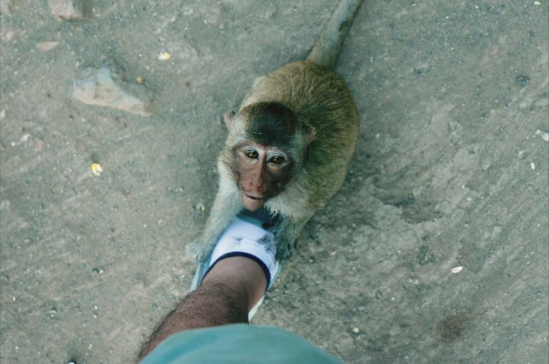 Hello you. Monkey Thailand Cute RePicture Travel An Eye For Travel