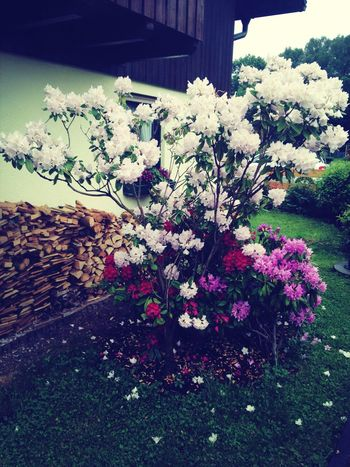 Flowers Colours Beautiful Amazing