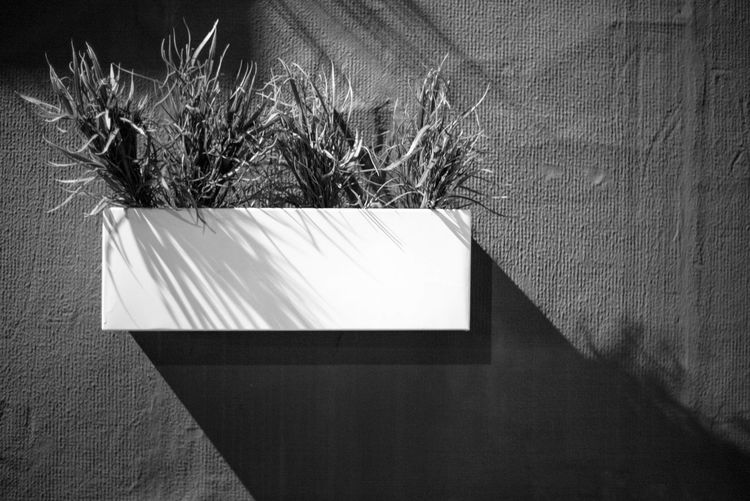 Plants in window box mounted on wall