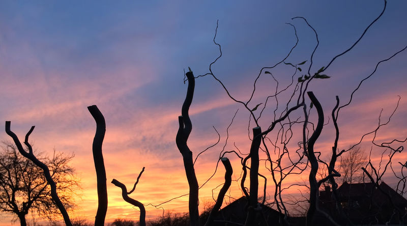 Bare Tree Beauty In Nature Day Nature No People Outdoors Plant Scenics Silhouette Sky Sunset Tranquil Scene Tranquility Tree Visual Feast EyeEmNewHere
