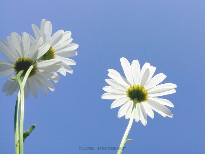 More flowers and less weapons!! Flwoers Flores Nature Natureza Sky Colors Blue Sky