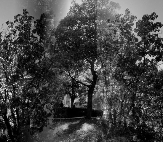 forest of shadows Nature Blackandwhite Light And Shadow Trees