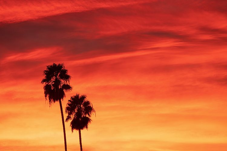 Sunset tonight was on FIRE! 🔥 I wasn't out shooting but did quickly take this shot from my window. 🌴🌴Two palms basking in the light. Sunset Sky Beauty In Nature Orange Color Plant Scenics - Nature Tranquility No People Silhouette Environment Low Angle View Nature Growth Cloud - Sky Tree Tranquil Scene Outdoors Dramatic Sky Landscape Single Tree