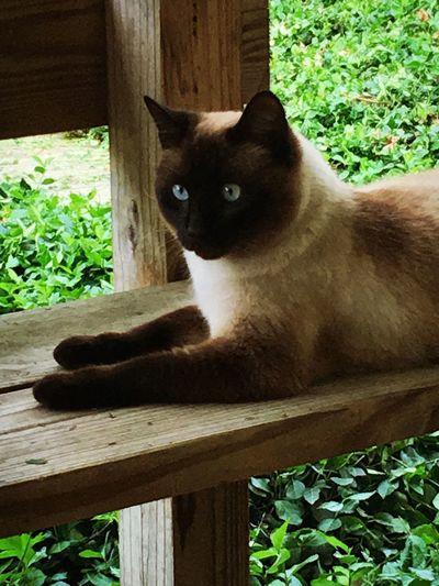 Portrait of cat sitting on wooden floor