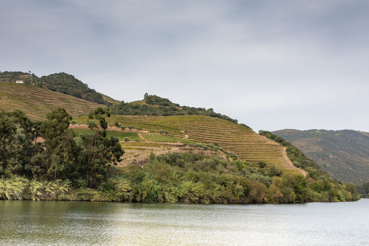 Douro river Portugal surrounded by hillside vineyards Douro  Portugal Beauty In Nature Day Environment Lake Land Landscape Mountain Nature No People Non-urban Scene Outdoors Plant River Scenics - Nature Sky Tranquil Scene Tranquility Tree View Into Land Water