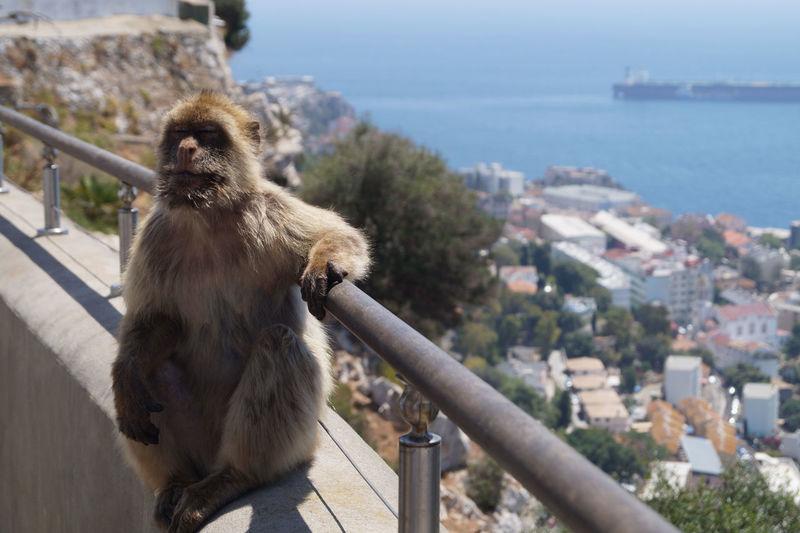 Monkey looking away in city