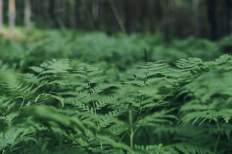 Green fern leaves in forest textured natural background