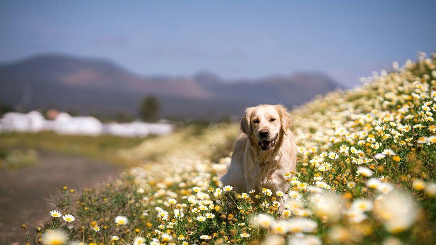 Dog in sunlight between flowers