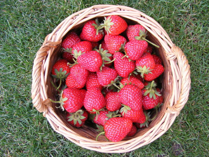 High Angle View Of Strawberries In Wicker Basket On Grassy Field