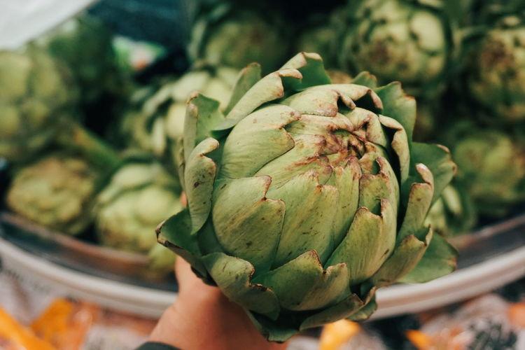 Close-up of hand holding artichoke
