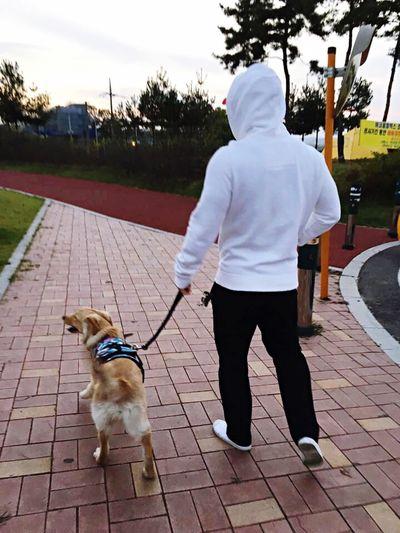 골든 개마음 골든리트리버 개마음 Goldenretriever Golden Retriever Dog