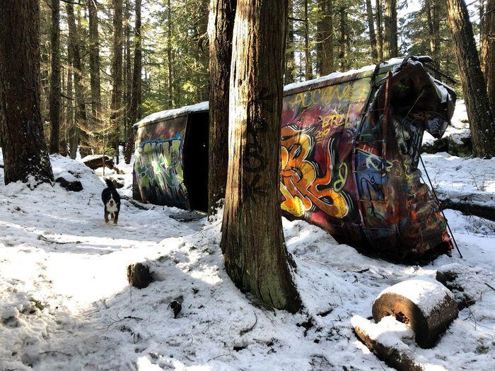 Graffiti on tree trunk in winter