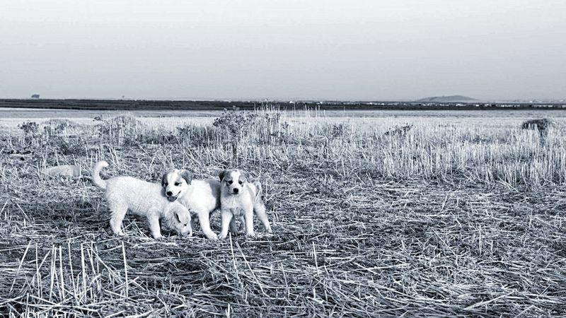 Blackandwhite Animals Wild Dogs Summer Dogs