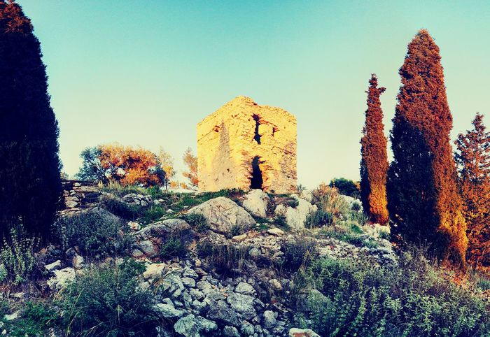 Flower History Nature Photography Sun Landscape Photo Tree Green Greece Sunlight ☀ Mountain Beauty In Nature Rocks Old Building And Sky Tower Old Tower Blue Colours Abandonedplaces Abandoned Abandon_seekers Abandon