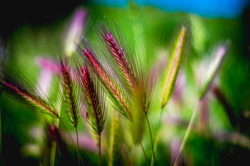 #nice AlpesMaritimes Beauty In Nature Botany Close-up Côte D'Azur Day FDG Focus On Foreground Fragility France Frenchriviera Grass Green Green Color Growing Growth Nature Night No People Outdoors Plant Selective Focus Stem Tranquility