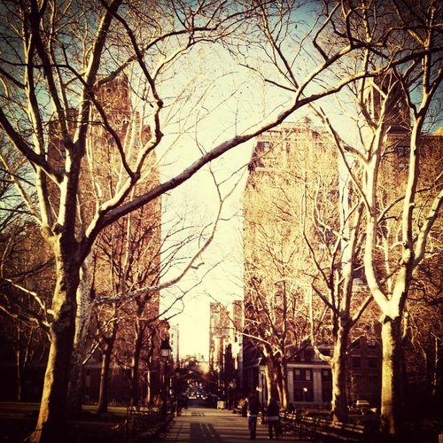 NY Park