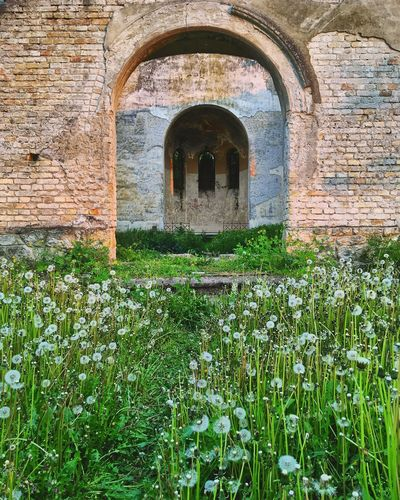 Arch Built Structure Architecture Day No People History Outdoors Building Exterior Nature Flower
