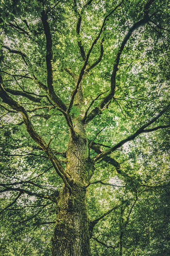 Backgrounds Beauty In Nature Branch Day Foliage Forest Full Frame Green Color Growth Land Low Angle View Lush Foliage Nature No People Outdoors Plant Rainforest Tranquility Tree Tree Canopy  Tree Trunk Trunk