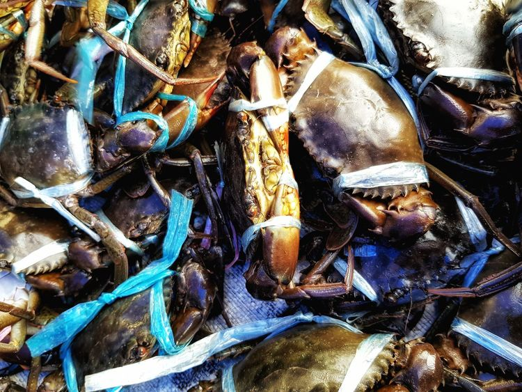 Caught Crab FishMarket Freshness Seafoods SEAFOOD🐡 Makanan Ketam Full Frame Backgrounds No People Large Group Of Objects Close-up Outdoors Day Food Stories