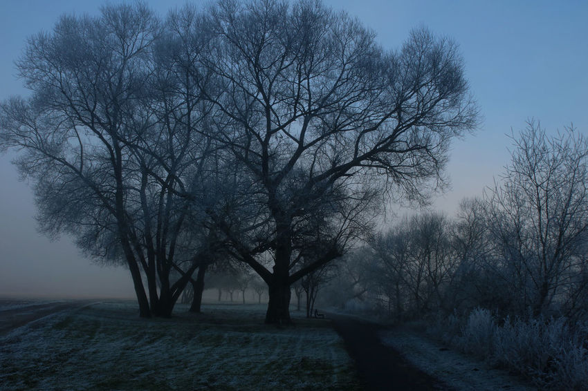 Bare Tree Beauty In Nature Branch Cold Cold Days Cold Temperature Day Fog Foggy Foggy Day Foggy Weather Frozen Frozen Nature Ice Landscape Nature No People Outdoors Scenics Sky Tranquil Scene Tranquility Tree Winter Wintertime