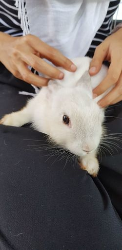 white bunny Bunny 🐰 Bunny Lover Human Hand Pets Close-up Rabbit - Animal Easter Bunny Rabbit Fluffy Whisker