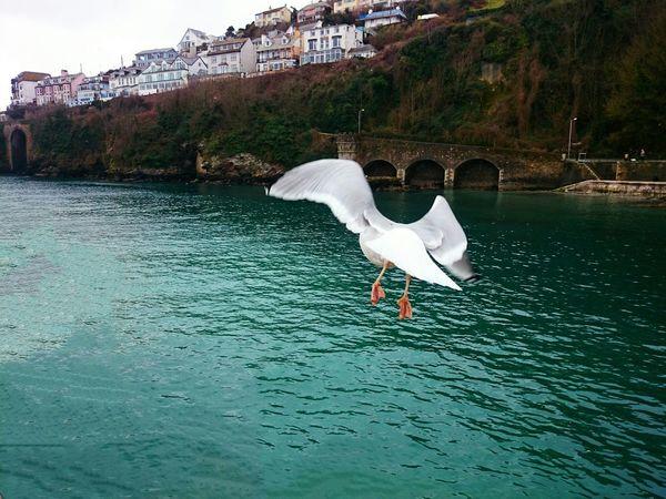 Sea View Bird SEAGULL IN FLIGHT Cornwall Seaside Flight Water Looe