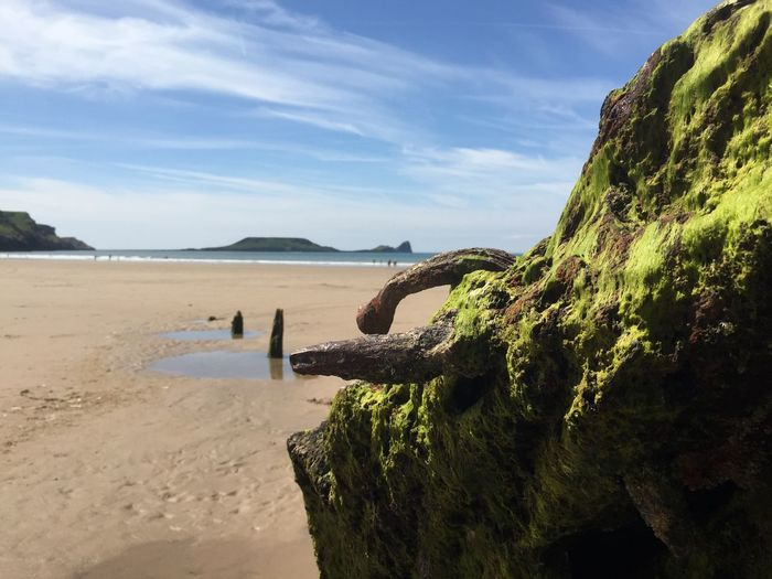 Moss covered rock at beach against sky