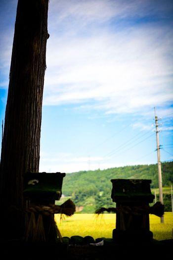 とても良い天気。電柱も、キャストの1人だわ。 Shrine Shinto Shrine Sky Cloud - Sky Plant Nature No People Tree Land Outdoors Architecture Technology Tree Trunk Built Structure Trunk Field Day Silhouette Connection Cable Tranquility