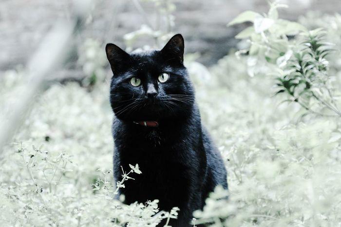Pet Love Black Cat Cute Pets My Cat Caturday Catoftheday Cat Lovers Cat Cats Cat♡ Pet Pets Pets Corner Pet Photography  Petstagram Black Cats Feline Moggy Catsofinstagram Cats Of EyeEm Catsagram