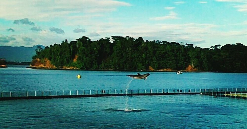 Water Countryside Nature DolphinShow Dolphins Subic Oceanadventure Eyeem Philippines