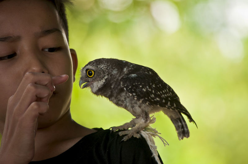 Close-up of boy with bird on shoulder