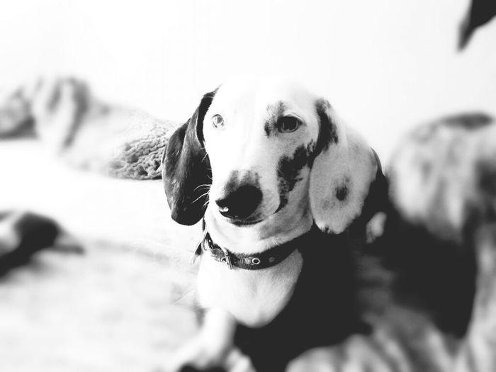 Blackandwhite CutepetsMonochrome I Love My Dog