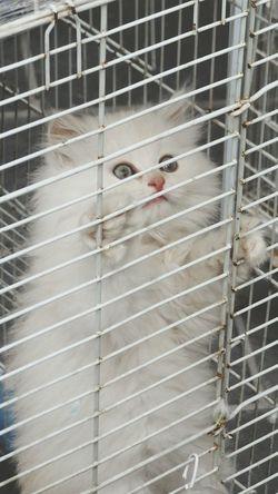 White Cutecat♥ Cutecat 🐱 Cute Pets EyeEm Pets In Doha Qatar Cute Pets Cat My Cute Pet White Cat