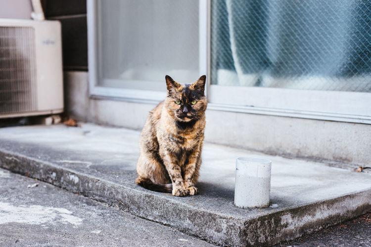 Portrait Of Stray Cat Sitting At Sidewalk