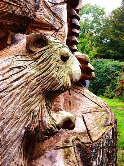 Carving Wood Wood Art Wood Carving Carving Carving - Craft Product Wood - Material Wooden Post Wooden Texture Wooden Tree Tree Trunk Animal Themes Squirrel Animal Carvings Outdoors Nature Close-up