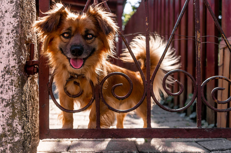 Portrait of dog by metal structure