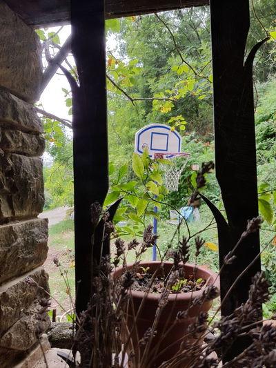 #forest #basket