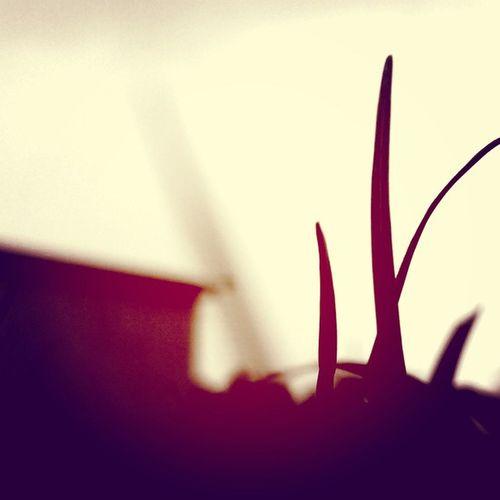 Shadows Mns_cse07