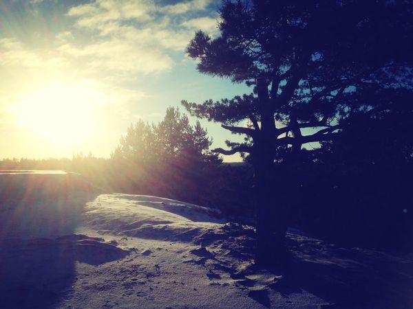 Nature Silhouette Winter Landscape