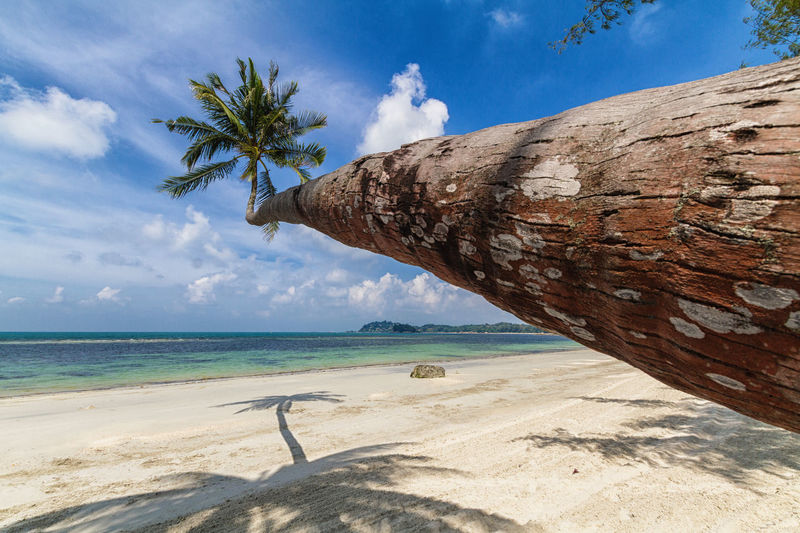 The palm Bintan  Holiday INDONESIA Palm Beach Beauty In Nature Cloud - Sky Day Horizon Over Water Nature No People Outdoors Palm Tree Sand Scenics Sea Sky Sunlight Tranquility Water