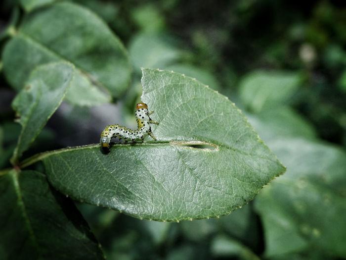🐛 Caterpillar