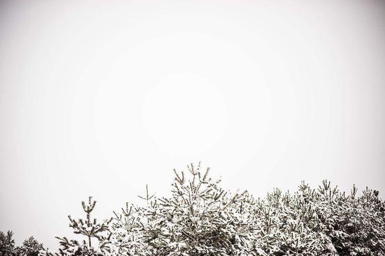 Snow Winter Wintertime Tree