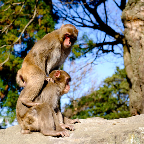Alertness Animal Family Animal Themes Animals In The Wild Curiosity Day Focus On Foreground Looking Away Mammal Monkey Oita Oita,japan Primate Relaxation Relaxing Sitting Takasakiyama Togetherness Two Animals Wildlife Young Animal Zoology The Portraitist - 2016 EyeEm Awards