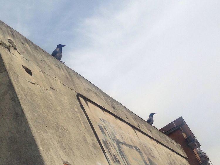 Bird Birds Crow Urban Urbanphotography Black