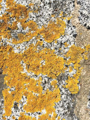 Yellow Full Frame Backgrounds Textured  Rough Close-up Lichen No People Outdoors Multi Colored Day Orange Stone Backyard Nature Break The Mold The Week On EyeEm